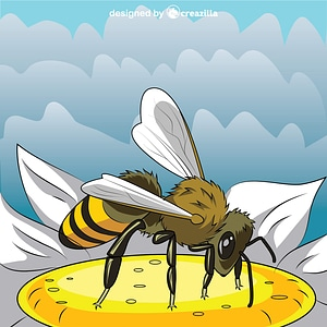 European Honeybee vector