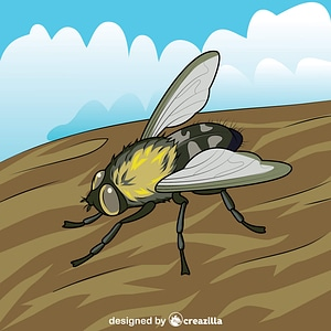 Cluster Fly vector