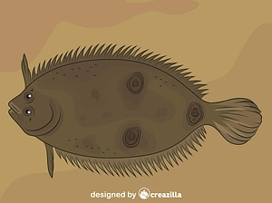 Three Eye Flounder vector