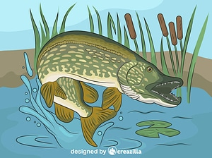 Young Northern Pike Bucktail vector