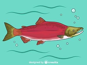 Sockeye Red Salmon (Oncorhynchus Nerka) vector