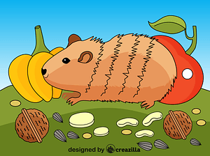 Guinea Pig vector