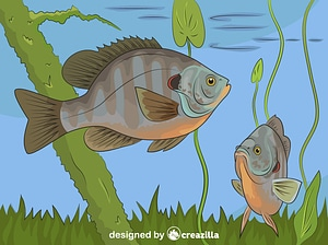 Redear Sunfish vector