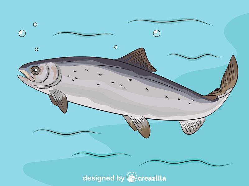 Atlantic salmon (Salmo Salar) vector