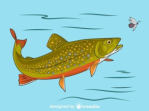 Brook Trout vector
