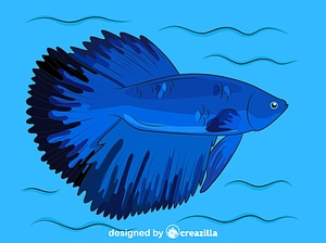 Halfmoon Betta Fish vector