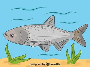 Bighead Carp vector