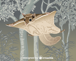 Woolly Flying Squirrel vector