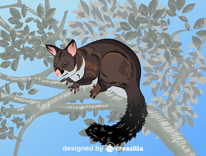 Brushtail Possum vector