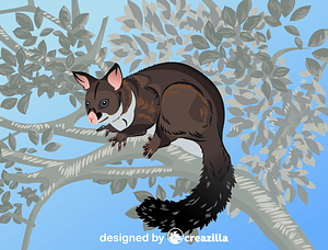 Brushtail Possum vector