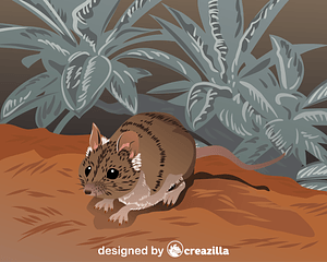 Julia Creek Dunnart vector