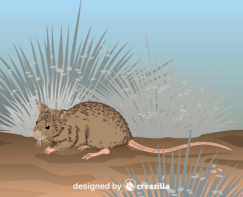 Shark Bay Mouse vector