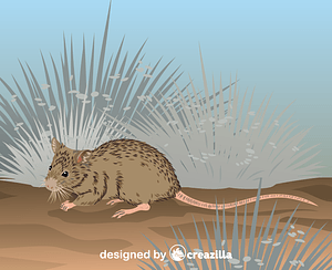 Shark Bay Mouse vector