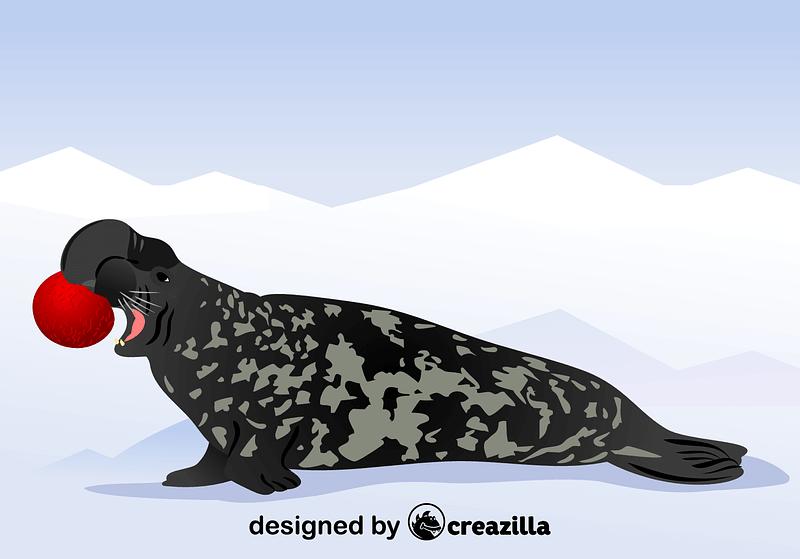 Hooded Seal vector