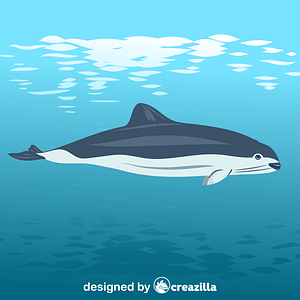 Spectacled porpoise vector