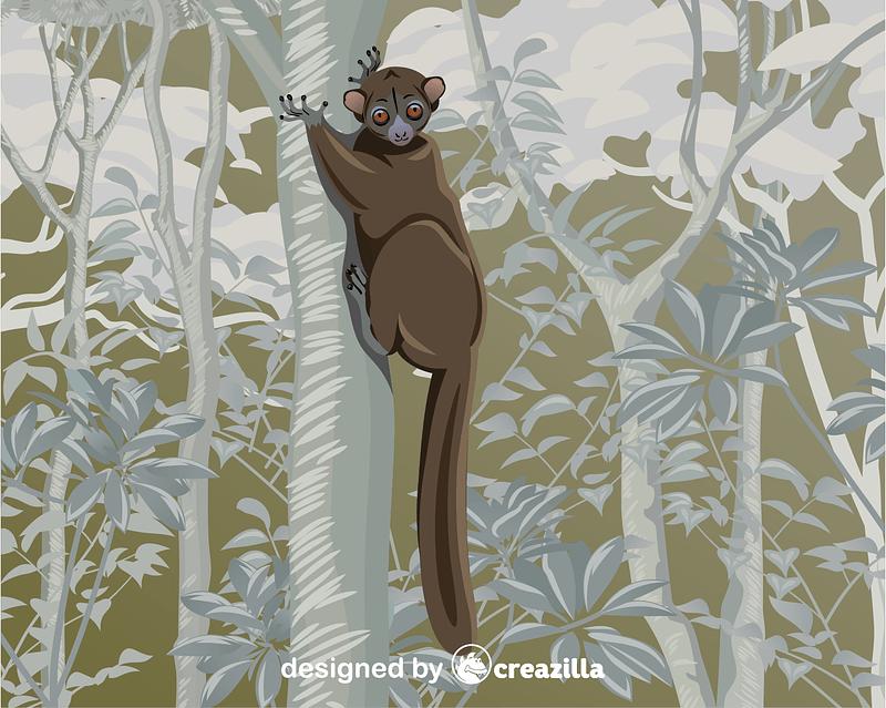 Northern Sportive Lemur vector