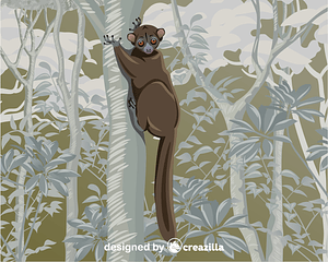 Northern Sportive Lemur vector