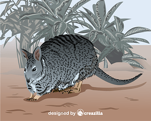 Banded hare-wallaby vector