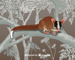 Bushy-Tailed Opossum vector