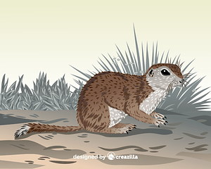 Mohave ground squirrel vector