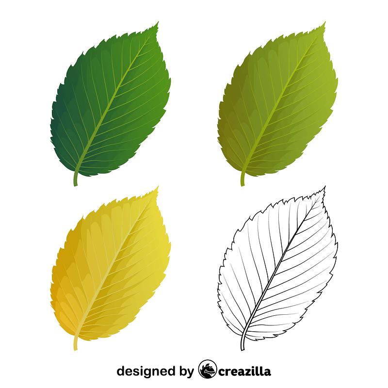 American elm leaves vector