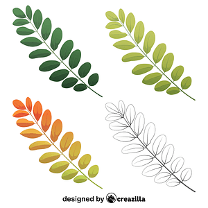 Black locust leaves vector