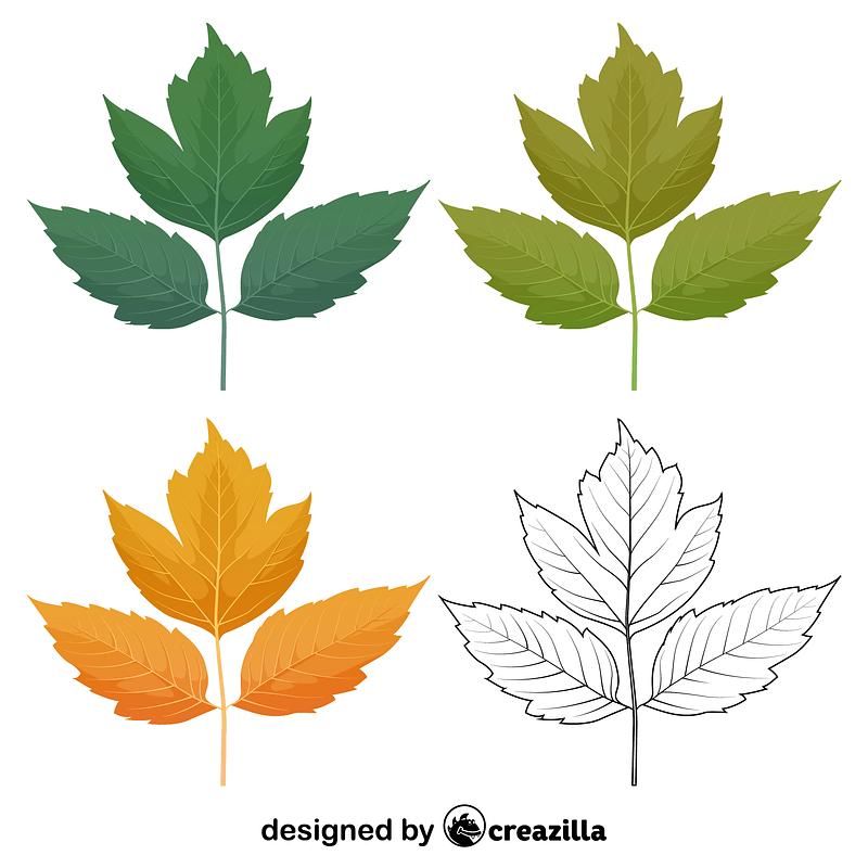 Box elder leaves vector