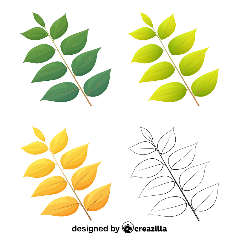 Kentucky coffee leaves vector