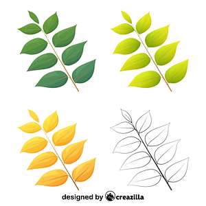 Kentucky coffee leaves vector