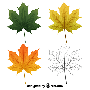 Norway maple leaves vector