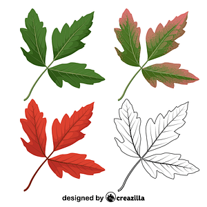 Paperbark maple leaves vector