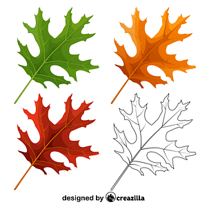 Scarlet oak leaves vector