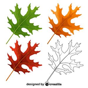 Vector de Scarlet oak leaves