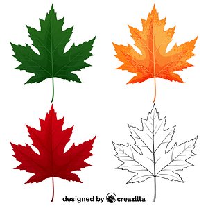 Silver maple leaves vector