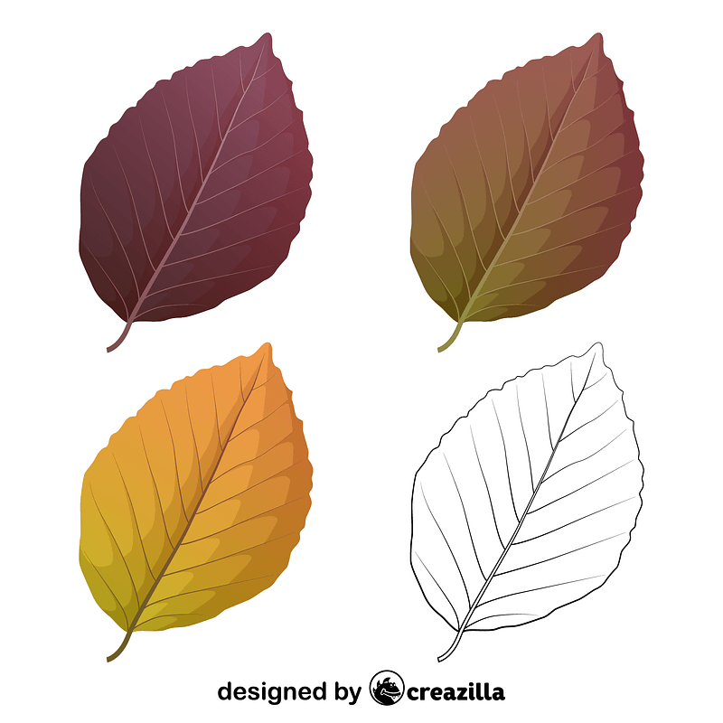 Copper beech leaves vector