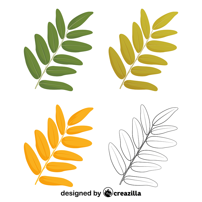 Honey locust leaves vector