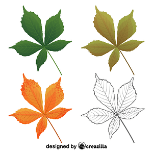 Horse chestnut leaves vector