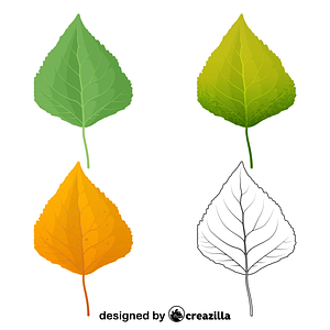 Quaking aspen leaves vector