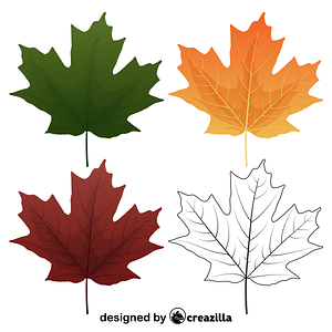 Sugar maple leaves vector
