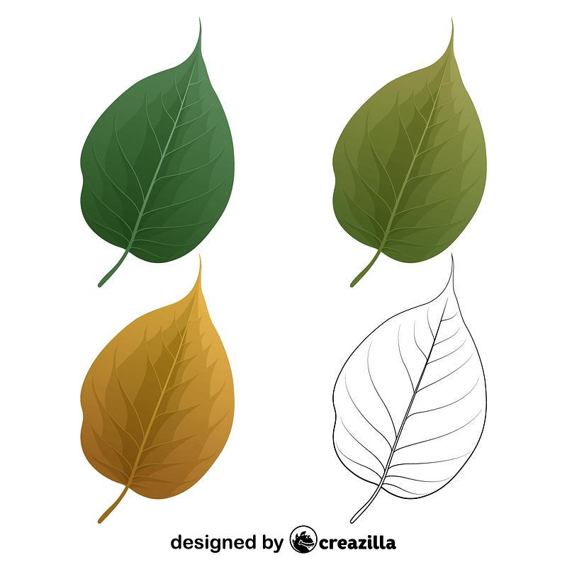 Osage orange leaves vector