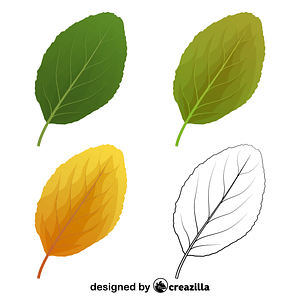 Plum tree leaves vector