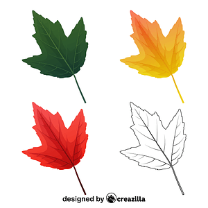 Red maple leaves vector