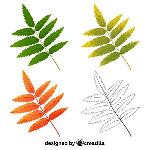 Rowan tree leaf ベクターイメージ狐
