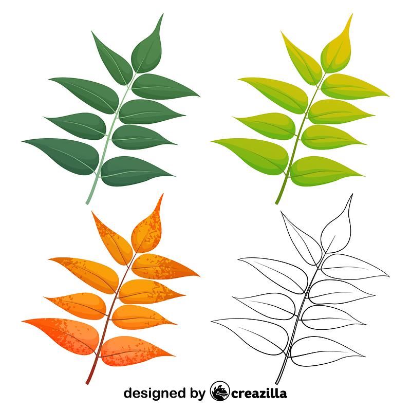 Tree of heaven leaves vector