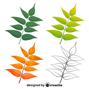 Tree of heaven leaves vector
