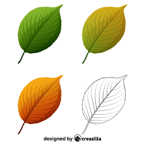 Apple tree leaves vector