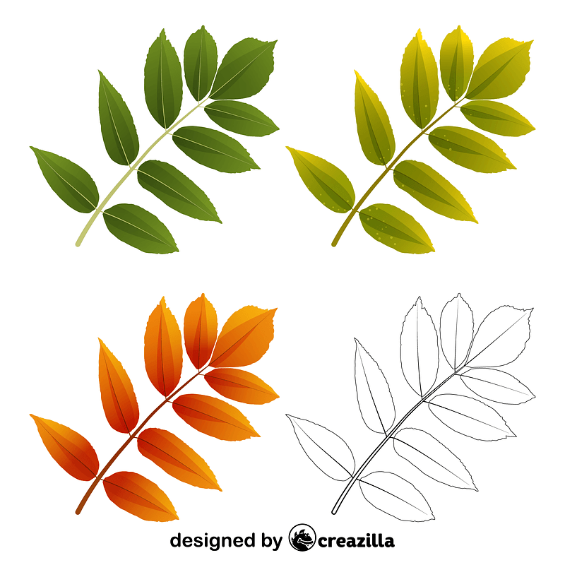 Ash tree leaves vector