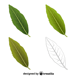 Laurel tree leaves vector