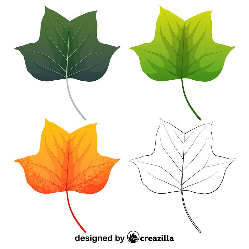 Tulip tree leaves vector