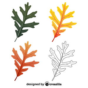 White oak leaves vector